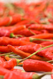Red peppers - shallow DOF Royalty Free Stock Images