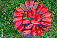 Red peppers on sheet cooker Stock Photography