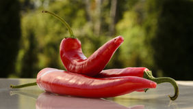 Red peppers in the summer rain Royalty Free Stock Image