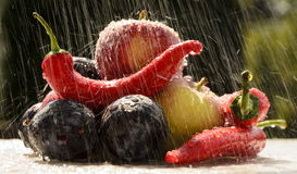 Red peppers in the summer rain Stock Photos
