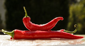 Red peppers in the summer rain Stock Image