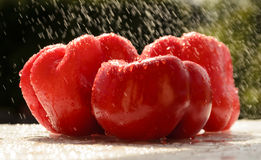 Red peppers in the summer rain Royalty Free Stock Photography