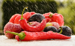 Red peppers in the summer rain Royalty Free Stock Images