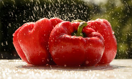 Red peppers in the summer rain Royalty Free Stock Photo