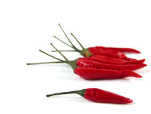 Red peppers on white background. Isolated still of red chilis, focus on the front Royalty Free Stock Photo