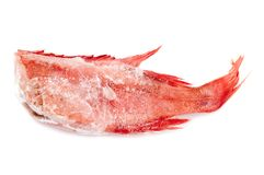 Red perch Stock Image
