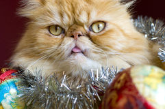Red persian cat with christmas ball Royalty Free Stock Photography