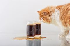 The red Persian kitten smells beer in a glass. Red with white the Persian kitten smells beer in tall glasses on a simple light background Stock Images