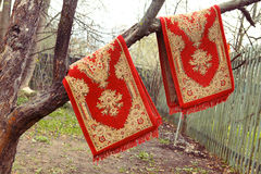 Red  persian rugs hanging on the old apple tree for dusting   Royalty Free Stock Photo