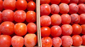 Red Persimmon Stock Images