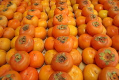 Red persimmon Royalty Free Stock Images