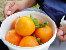 Red Persimmon in a box Royalty Free Stock Image