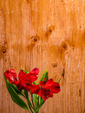Red Peruvian Lily on plywood Background Stock Photography