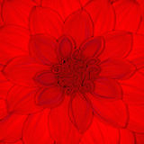 Red petals Royalty Free Stock Photo