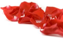 Red petals. Over white background Stock Photos