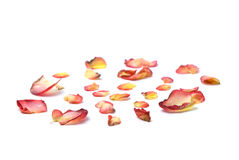 Red petals. Red and yellow petals on white surface Stock Photo