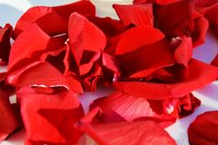 Red petals, background Stock Image