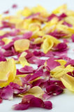 Red petals backgrounds Royalty Free Stock Images