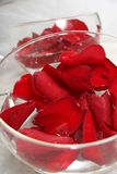 Red petals in the bowl Stock Photography