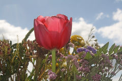 Red petals. Royalty Free Stock Photo