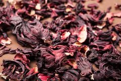 Red petals of hibiscus. Brown background. stock image