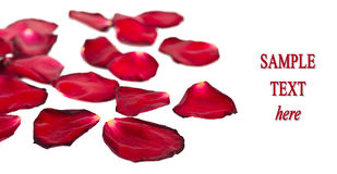 Red petals isolated on white background Royalty Free Stock Image