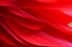 Red petals Stock Photography