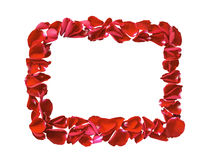 Red petals rose flower frame isolated Royalty Free Stock Photos