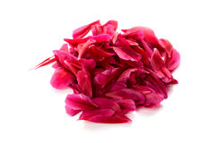 Red petals Royalty Free Stock Photography