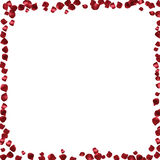Red petals on a white background. Stock Photo