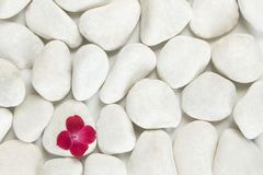 Red petals on white pebble background Royalty Free Stock Photo