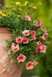 Red petunias flowers Stock Image