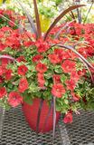 Red Petunias #1 Stock Images