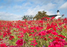 Red Phlox and White Church Stock Image