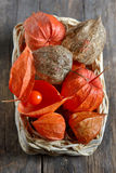 Red Physalis fruits Stock Images