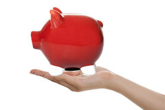 Red Piggy Bank in Hand Royalty Free Stock Images