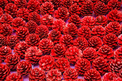 Red Pine cone Stock Photography
