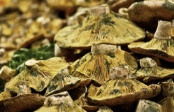 Red pine mushroom Stock Images