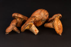 Red pine mushrooms Royalty Free Stock Image