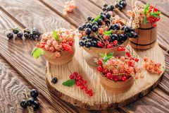 Red, pink, black and white currant Royalty Free Stock Photos