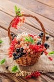 Red, pink, black and white currant Stock Image