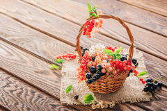 Red, pink, black and white currant Royalty Free Stock Photography