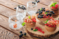 Red, pink, black and white currant Stock Images