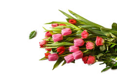 Red and pink bouquet of fresh spring tulip and roses flowers. Isolated stock photo