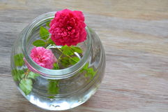 Red and pink fairy rose on water in glass bottle. Red and pink fairy rose on water in the glass bottle Royalty Free Stock Photos