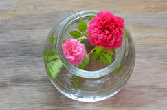 Red and pink fairy rose on water in glass bottle. Red and pink fairy rose on water in the glass bottle Royalty Free Stock Image