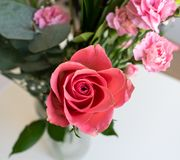 Light pink red flowers bouquet. Indoors with white background. stock photos