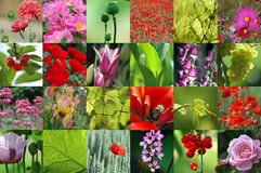 Red and pink flower collection Stock Photography