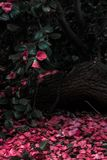 Red, Pink, Flower, Plant royalty free stock images