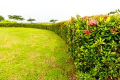 Red and Pink Flowers Growing As a Wall around a Green Grass Gard Royalty Free Stock Photos